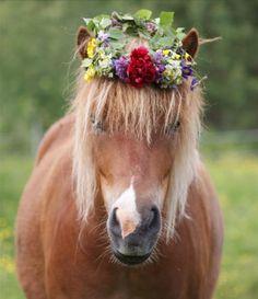 Hippie horse!