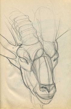 Мартынюк В. Конструктивный рисунок головы козла.