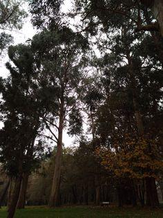 bebetecavigo. Parque A Bouza, Vigo. Pinos, eucaliptos, patos... en medio de la ciudad, así es Vigo. bebetecavigo