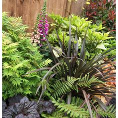 Find Shady Border Collection - x at Homebase. Visit your local store for the widest range of garden & outdoor products. Garden Border Plants, Cottage Garden Borders, Rockery Garden, Ferns Garden, Cottage Garden Plants, Garden Shrubs, Flowering Shrubs, Shade Garden, Garden Beds