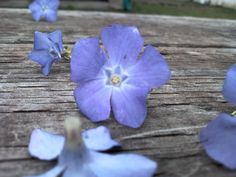 Spring is springing up in my backyard! (taken with my cell phone!!!)