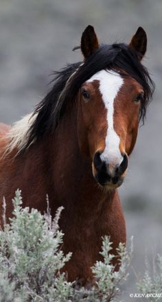 Please help save America's wild horses! Please Contact: wildhorsepreservation.org for more information.