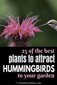 Flowers That Attract Hummingbirds, How To Attract Birds, Attracting Hummingbirds, Hummingbird Flowers, Hummingbird Garden, Hummingbird Nests, Shade Plants, Cool Plants, Butterfly Plants