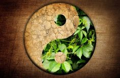 """""""The ancient systems of nutritional healing regarded different foods as having different energetic qualities.Just as yin and yang can be observed in a person's energy, they can also be seen in a food."""" - Mantak Chia and William Wei Ace Of Pentacles, Chinese Medicine, Different Recipes, Yin Yang, Feng Shui, Image Search, Healing, Herbs, Nutrition"""