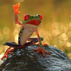 Притча о лягушке-победит…