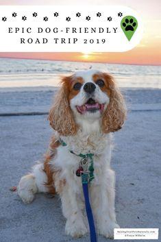 dog training,teach your dog,dog learning,dog tips,dog hacks Labrador Retriever, Golden Retriever, Dog Travel, Family Travel, Travel Tips, Travel Destinations, Road Trip With Dog, Dog Friendly Hotels, Freundlich
