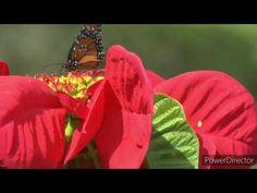 Imagini de vis si muzica de relaxare! Muzica de meditatie 2020! Video fu... Youtube, Plants, Plant, Youtubers, Youtube Movies, Planets
