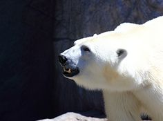 Asahiyama Zoo. Looking for more information aboout Hokkaido? Go Visit Eastern Hokkaido. http://ja.visit-eastern-hokkaido.jp/