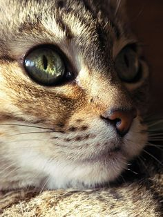 """Cats look beyond appearances--beyond species entirely, it seems--to peer into the heart."" --Barbara L Diamond"