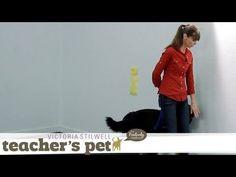 Training a Dog to Heel   Teacher's Pet With Victoria Stilwell