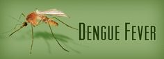 Homeopathic remedy for Dengue Fever