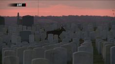"""""""This picture at Jefferson Barracks was captured at sunrise during Fox 2 News. Thank you to our veterans and active duty military on this Veterans Day!"""" - via Margie Ellisor on FOX 2  Please share your story of military service in the comments."""