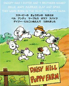Daisy Hill Puppy Farm Story 1