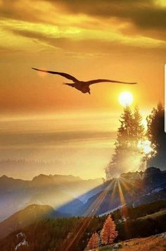 Welcome to my Workspace Beautiful Sunrise, Beautiful Birds, Beautiful World, Beautiful Images, Eagle Pictures, Nature Pictures, Sunset Wallpaper, Nature Scenes, Science And Nature