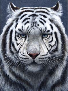 White Tiger, UK Wildlife Artist Jeremy Paul