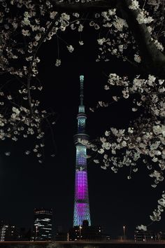 Cherry blossom and Tokyo Sky Tree by Yukinobu Zengame on Tokyo Night, Tokyo Skytree, Japan Image, Visit Japan, Dream Land, Ohana, Tokyo Japan, Japanese Culture, Cherry Blossoms