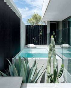 A Passive House in Perth with desert modernist-style influences White Concrete, Concrete Wall, Outdoor Spaces, Outdoor Living, Outdoor Decor, Crazy Paving, Small Swimming Pools, Live Edge Furniture, Timber Cladding