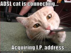 cat chewing computer cord