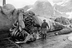 Se Theodor Anderssons fotografier - Hvalfangstarkiver.no