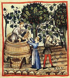 Harvesting and Pressing Grapes. Notice the barrels, the basket, and the apron with a tie in the back.