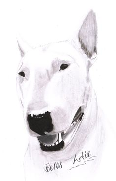 Bull Terrier @Aschlie Town