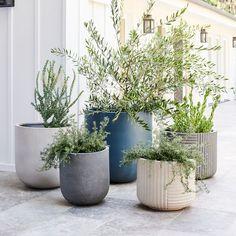 Cecilia Fiberstone Indoor/Outdoor Planters Stone Planters, Modern Planters, Garden Planters, Outdoor Pots And Planters, Large Indoor Planters, Garden Bed, Balcony Garden, Faux Plants, Indoor Plants