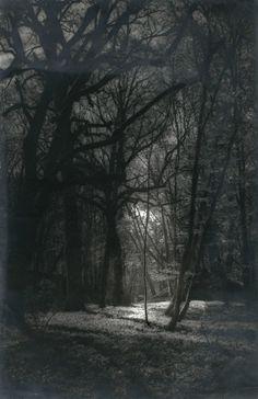 Light in the Woods by Josef Breitenbach, 1930