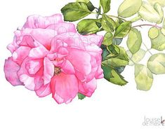 Rose watercolor painting print, 5 by 7 size Watercolor rose print, botanical art, rose print, rose painting. Watercolor Rose, Watercolor Print, Watercolor Paintings, Original Paintings, Watercolors, Watercolour Tutorials, Art Mural, Flower Art, Art Flowers