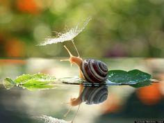 En una coincidencia fotográfica que se creería increíble, el fotógrafo ucraniano Vyacheslav Mischenko logró captar esta imagen de un caracol protegiéndose de la lluvia con una flor.