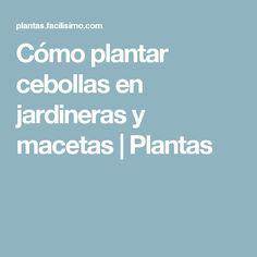 Cómo plantar cebollas en jardineras y macetas | Plantas