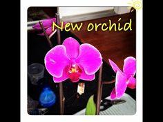 Покупка ДЕШЕВОЙ орхидеи, Что делать первым делом? - YouTube