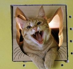 """** """"Todays me brokes meez purrsonal record fer de most consecutives days lived! Me and meez humans watched me weight!"""""""