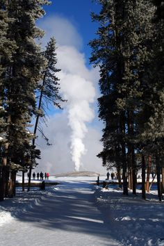 Old Faithful in Yellowstone National Park during winter
