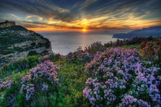 Flowers In Sunset - flowers, sunset, sky, sun, ocean nature, flower, purple, clouds, landscape