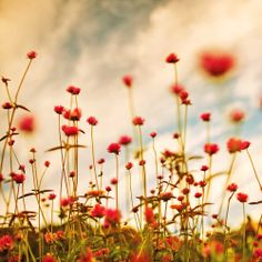 Summer flowers are just around the corner! #wallpaper #rjsthisandthat #summer #flowers #photography #red