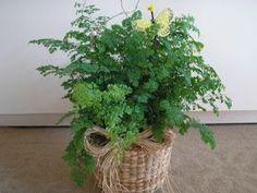 Mirian Decor: Plantas para Banheiro Avenca Forneça luz difusa. Mantenha a terra úmida o ano todo. Quanto maior a temperetura, maior a necessidade de umidade.