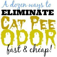 Best cat spray cleaner best cat urine remover,best way to clean cat pee carpet cleaner to get rid of cat urine,cat peeing in new house cat urine deodorizer. Cat Pee Smell, Cat Urine Smells, Remove Cat Urine Smell, Cat Urine Remover, Odor Remover, Party Deco, Dog Pee, Pet Odors, Cleaning Pet Urine