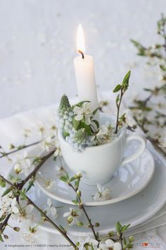 Lit candle in teacup decorated with grape hyacinths and branches of blackthorn blossom | © living4media | Martina Schindler | 11438520