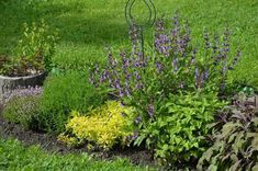 Autor: lubica.k Herb Garden, Herbs, Plants, Author, Herbs Garden, Herb, Plant, Planets, Medicinal Plants