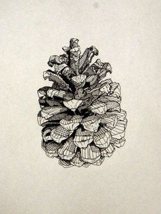 First attempt to draw a pine cone in order to pass my art class. Art And Illustration, Gravure Illustration, Illustrations, Line Drawing, Drawing Sketches, Painting & Drawing, Art Drawings, Pine Cone Drawing, A Level Art