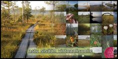 Astu sisään Virtuaalisuolle Tree Forest, Environmental Science, Science And Nature, Geography, Finland, Plants, Trees, School, Natural