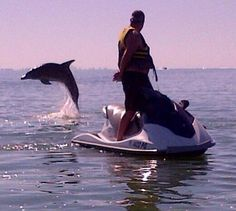 See dolphins in the wild on one of our wildly popularwaverunner  dolphintours in Fort Myers Beach. All levels of riding experience welcome!  Reserve at305-765-4386