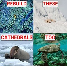 We need to help Mother Nature. Stop killing her! We need to help Mother Nature. Stop killing her! Save Planet Earth, Save Our Earth, Save The Planet, Slim Waist Workout, Faith In Humanity Restored, Visual Statements, Social Issues, Global Warming, Mother Earth