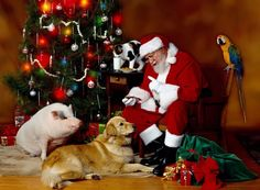 santa claus and animals