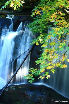 Whatcom Falls... Bellingham, Washington