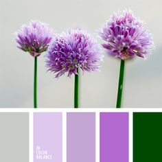 color púrpura, combinación contrastante, combinación de colores contrastante, combinación de colores vivos, gris y violeta, matices de color púrpura, selección de colores, tonos violetas, tonos violetas y verdes, verde fuerte, verde y violeta, violeta pálido.