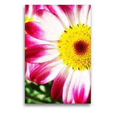 Das Bild entstand bei mir im Garten :) Der Handel, Mood, Plants, Graphics, Pictures, Anniversary, Marriage Anniversary, Flowers, Plant