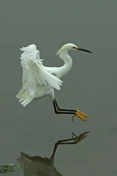 touch down by Greg.Magee, via Flickr