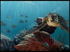 The following is based on information from the Recovery Plan for Hawksbill Turtles in the U.S. Carribean Sea, Atlantic Ocean, and Gulf of Mexico, National Marine