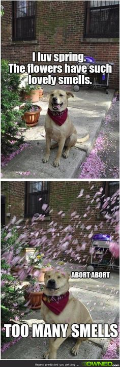 it's spring nope owl meme - Google Search | Things that ...